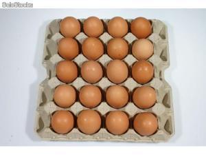 huevos-de-gallina-5826091z0